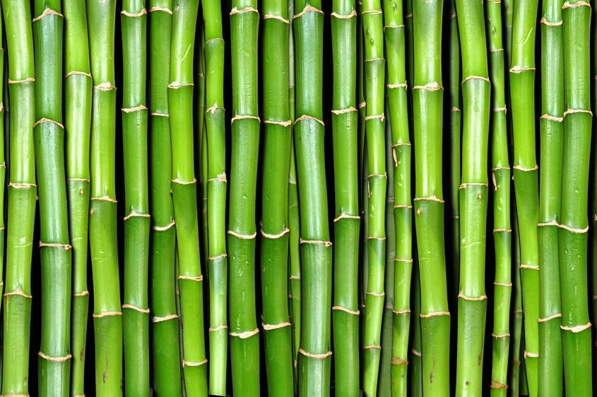 Cabinet approves restructured National Bamboo Mission