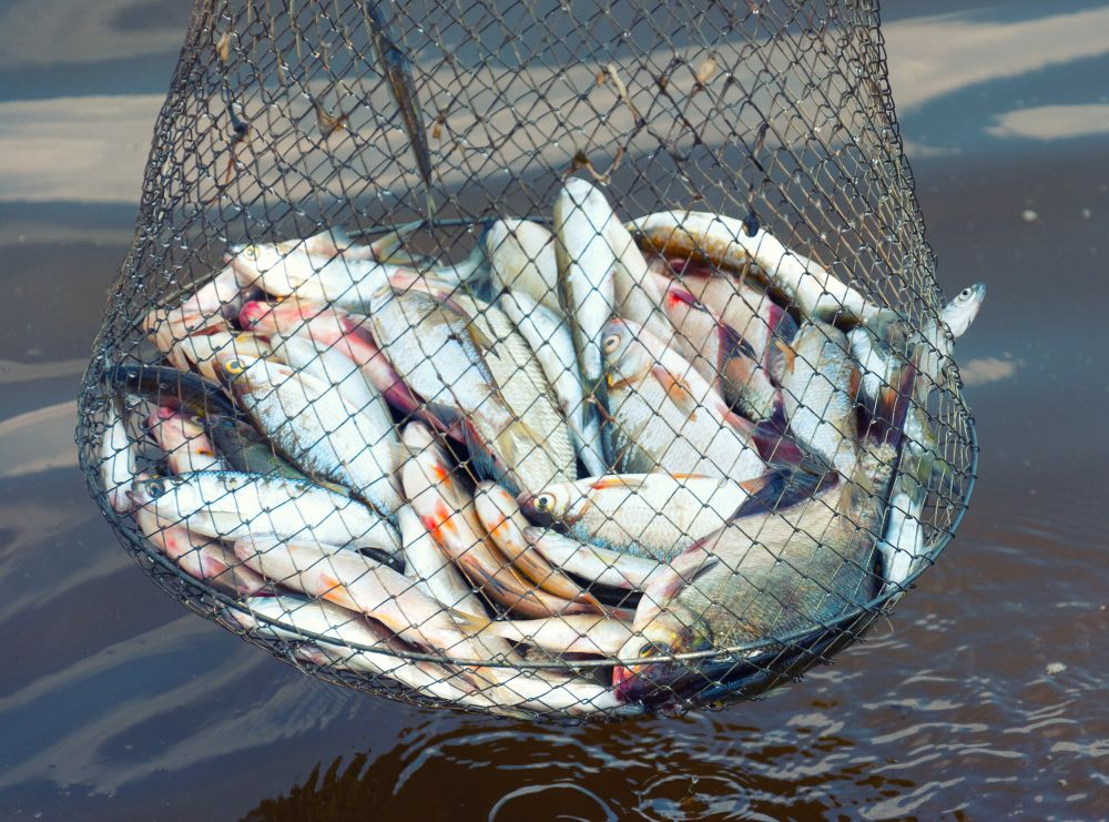 CIFTest: Fish adulterant detection kit gets commercialised