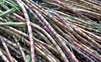 ISMA calls new sugarcane FRP 'unaffordable' for sugar mills