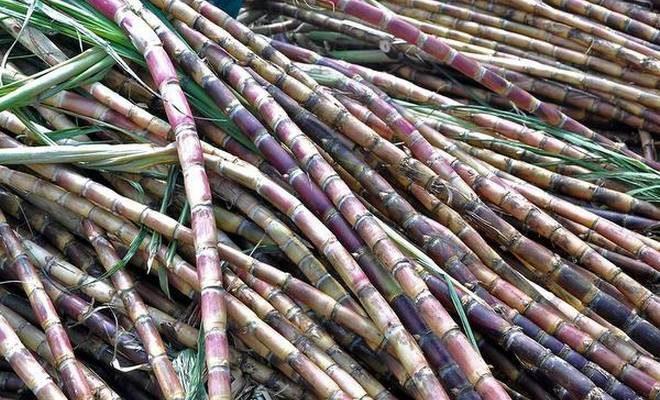 ISMA calls new sugarcane FRP 'unaffordable' for sugar mills