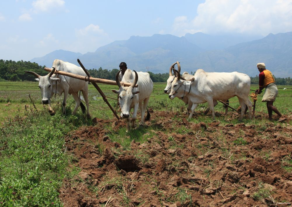 No monsoon respite, Kharif crop sowing declines