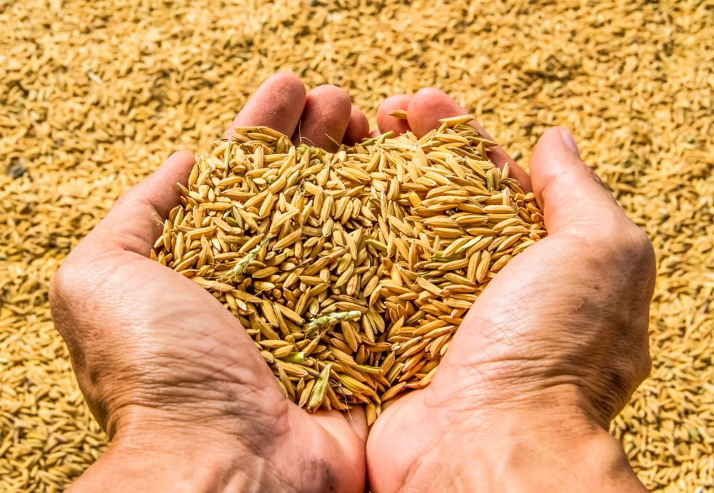 Foodgrains production estimated at 283 mn tonnes in 2018-19