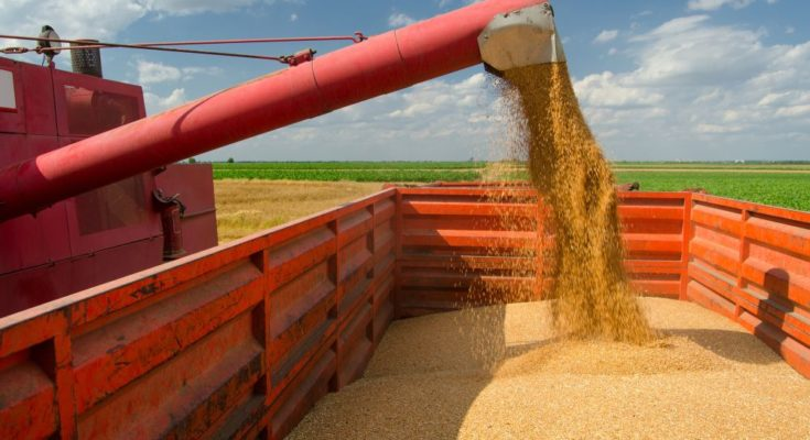 Agri output growth to keep food prices low next decade: OECD-FAO