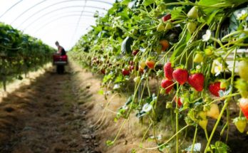 Asia needs $800 bn investment agri-food sector: PwC, Rabobank, Temasek study