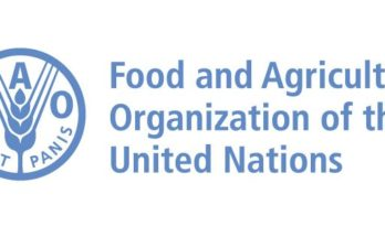 FAO: Empowering farmers through innovation is key for sustainable development