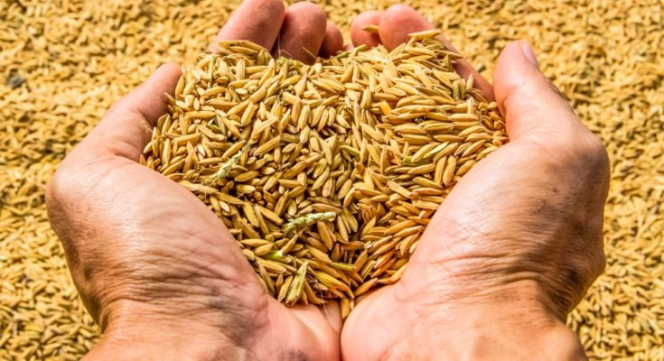 FSII member seed companies pledge over Rs 9 Cr for COVID-19 relief measures
