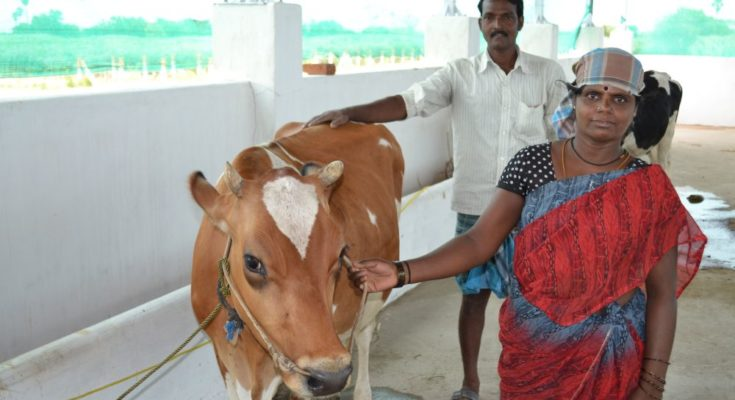 Cabinet approves setting up of Animal Husbandry Infrastructure Development Fund