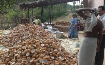 Centre makes 5% hike in coconut MSP for 2020 season
