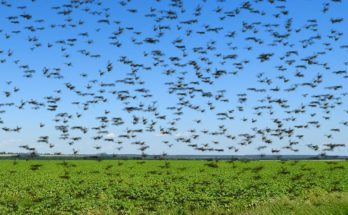 HIL India exports insecticides to Iran for Locust Control Programme