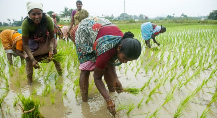 10K Farmer producer organisations to create avenues for development: Agri Minister