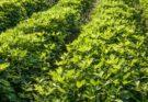 Bharti AXA General Insurance launches 'Bohot Zaroori Hai' campaign for crop insurance