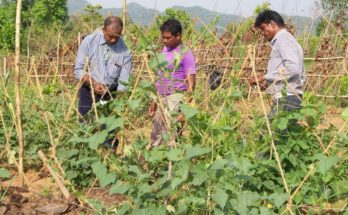Diversification, technology vital for vegetable farming to mitigate climate change: Horticulture Commissioner