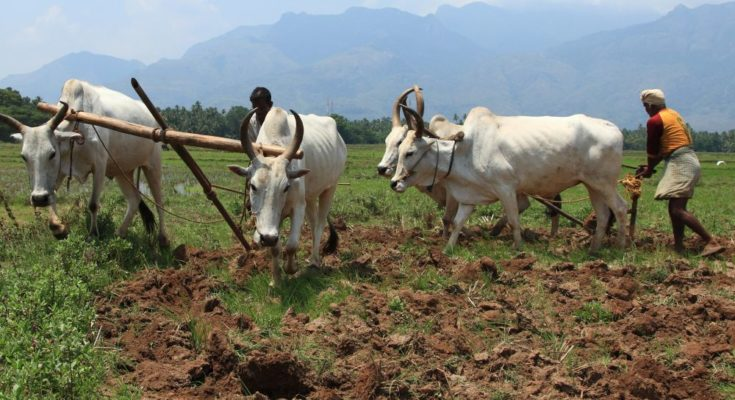 How has been Kharif crop sowing this year?