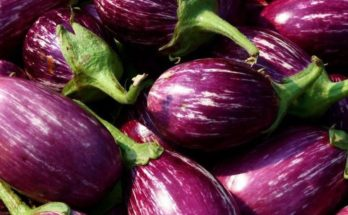 Alliance for Agri Innovation urges government to allow Bt Brinjal trials
