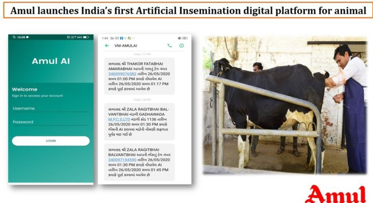 Amul digitises artificial insemination operations for dairy cattle