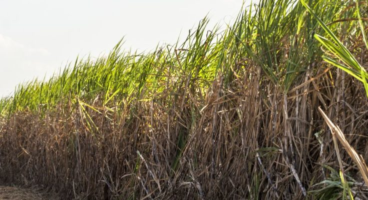 Cabinet approves Fair and Remunerative Price of sugarcane for 2020-21