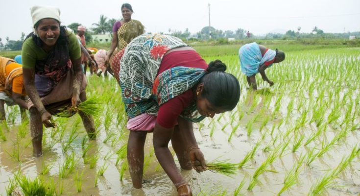 Kharif sowing sees significant increase in 2020