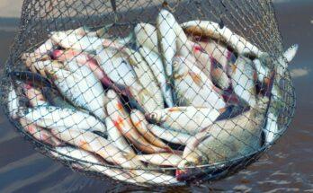 Aquaculture to aid in creating Aatmanirbhar Bharat and facilitate rehabilitation for reverse migrants