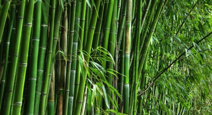 Centre launches 22 bamboo clusters in 9 states and unveils logo for National Bamboo Mission