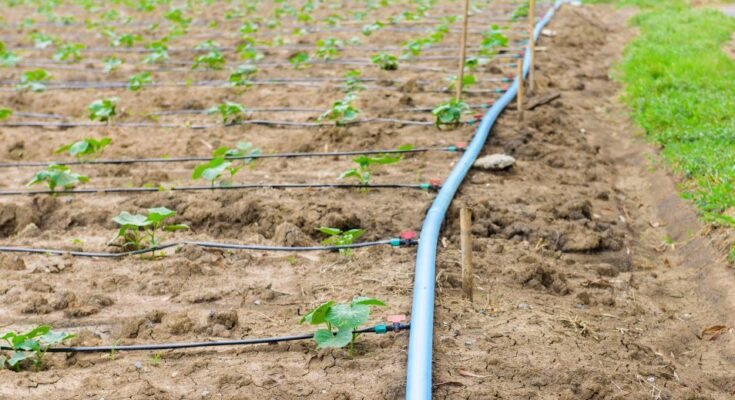 Centre sets target of covering 100 lakh ha in 5 years under micro irrigation