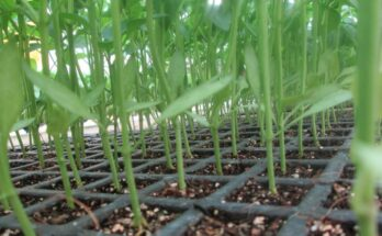Global Hydroponics Market to grow USD 17 bn by 2025: Valuates Reports