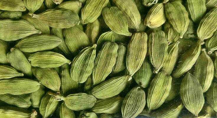 How has been the cardamom cultivation over the years?