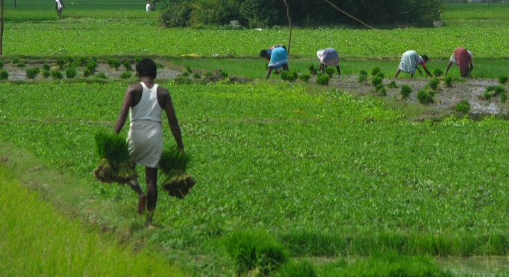 Kharif crops sowing grows 5.71% this year