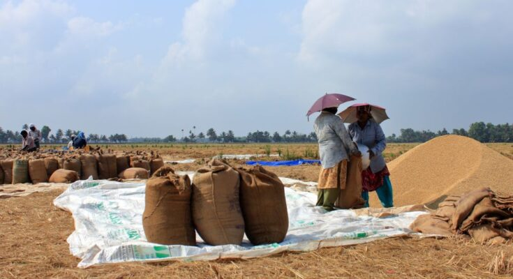 Agencies procure nearly 8 lakh MT paddy till Oct, 4
