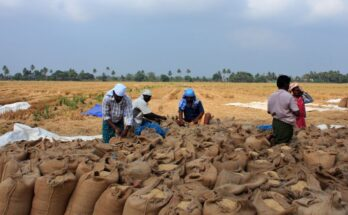 Centre makes paddy procurement worth Rs. 2,882 cores in 11 days