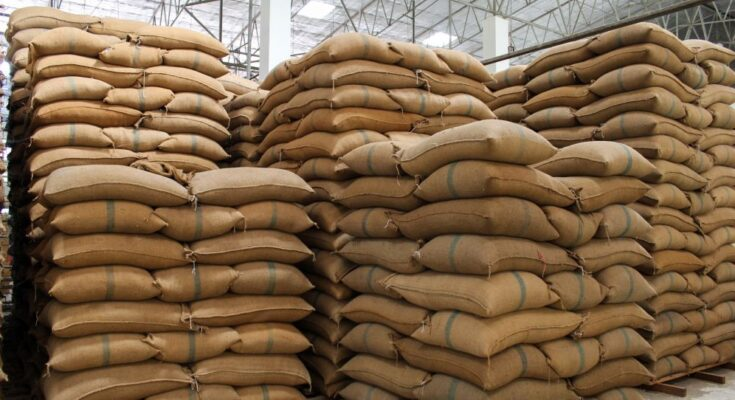 Day 12: Paddy procurement jumps 33% during ongoing Kharif Marketing Season