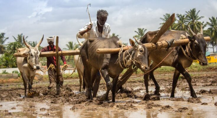 Farm Reforms Need to Germinate Despite Din and Fury
