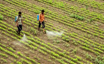 Is there a double whammy for agrochemical industry in India?