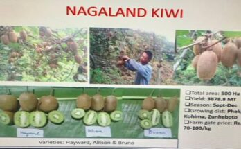 Agriculture ministry organises meet on 'Value Chain Creation for Kiwi Fruit'