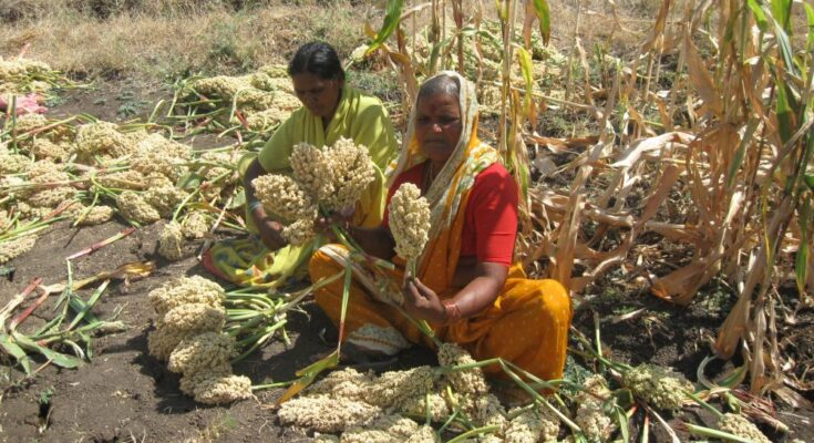 APEDA, IIMR make action plan for promotion of millets and millet products