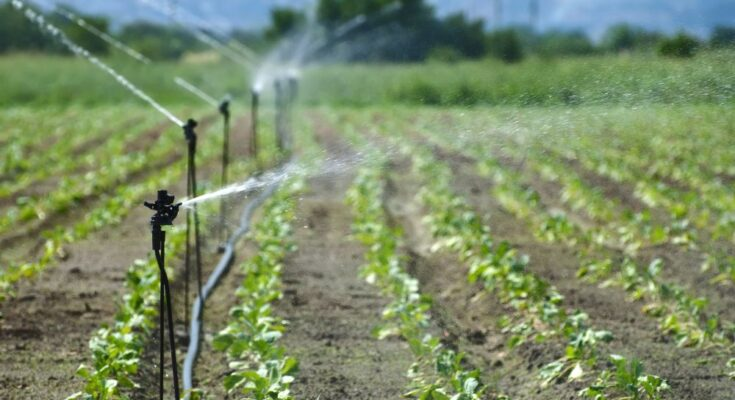 Union Minister emphasises on better water management for sustainable agriculture