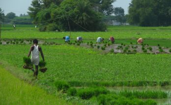 9 measures Union Budget proposes for agriculture and allied sectors