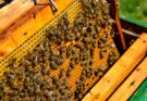 All things you need to know about National Beekeeping & Honey Mission and its implementation