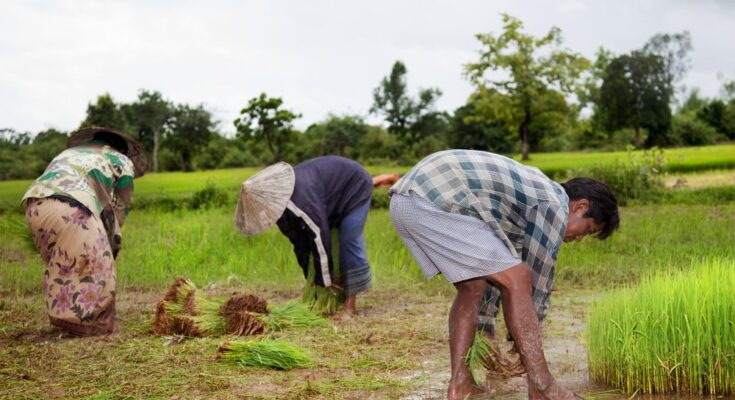 Centre allocates Rs 16,000 Cr for crop insurance scheme, PMFBY for 2021-22