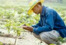National e-Governance Plan in Agriculture (NeGPA) digitalising farming practices