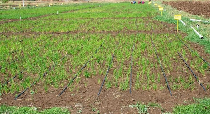 PMFBY: Centre appoints Leads Connect, Agriwatch, IAR to conduct Crop Cutting Experiments in 100 districts