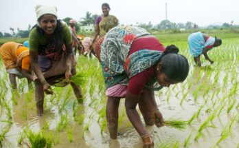 Harnessing agriculture as tool of women empowerment
