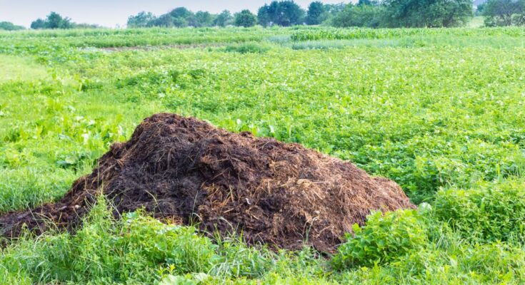 India to certify large traditional organic farming areas as organic production hubs