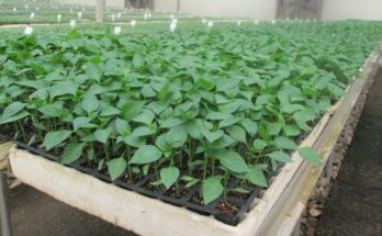 Is hydroponics a viable alternative for Indian farming community?
