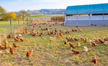 AGCO Agriculture Foundation confers AAF Award and $50,000 grant to Global Animal Partnership