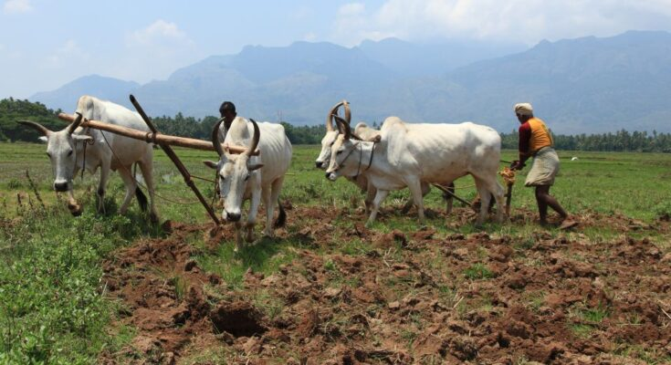 Paddy Producers: Transforming lives with direct-seeded rice
