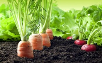 UPL, Soil Health Institute to jointly drive innovation in agriculture