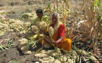 Asia-Pacific institutions hold regional consultation on forgotten foods