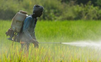 Generic agrochemicals in India poised for a bonanza as 22 molecules set to go off patent soon