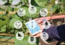 Global Agriculture IoT market to touch $18.1 bn by 2026: Study