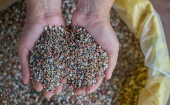 India makes 'Action Plan' to become self-sufficient in phosphatic fertilisers